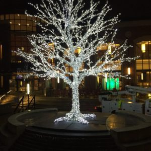 illuminated tree rose theatre brampton