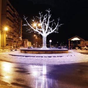 cumberland illuminated tree